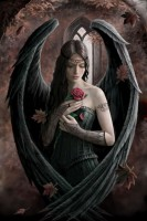 carte anne stokes ange angel rose