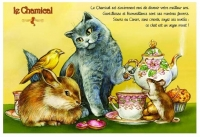 Carte Postale Severine Pineaux Chat Le Chamical CPK129