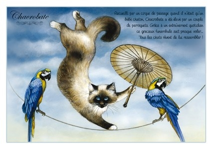 "Carte Postale Chat ""Chacrobate"" / Cartes Postales Chats"